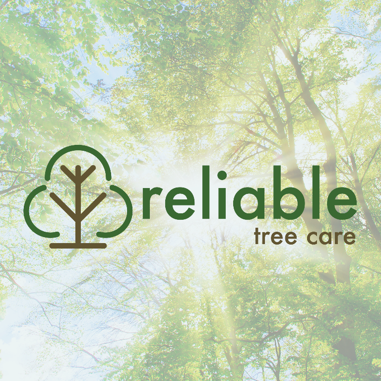 Reliable Tree Care and Removal