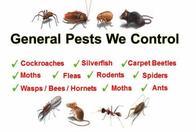Image 4 | Best Price Exterminators