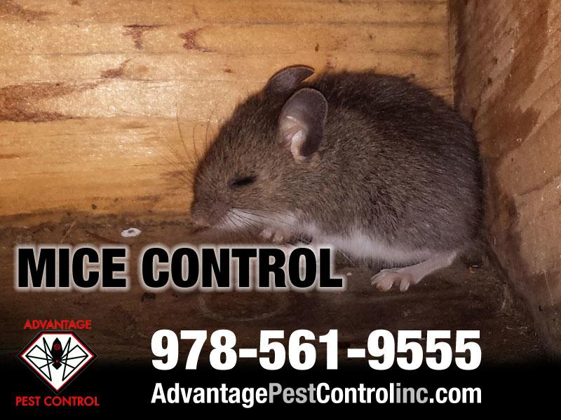 Advantage Pest Control, Inc image 13
