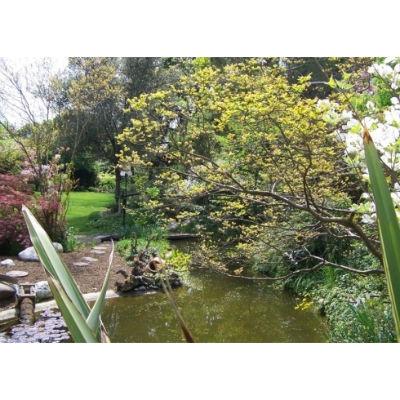 Vivai Giardini Martignago