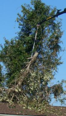 Jeff's Tree Service image 1