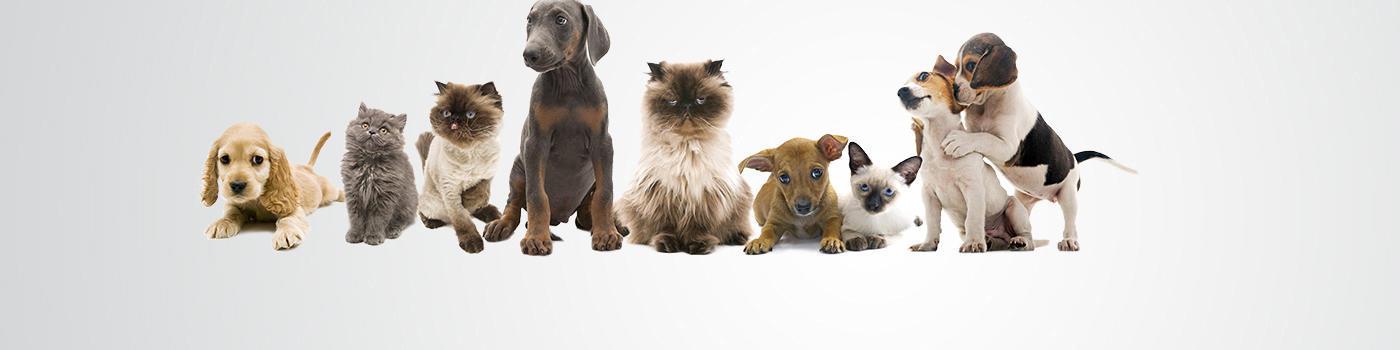 Barkshire Pet Care Center image 0