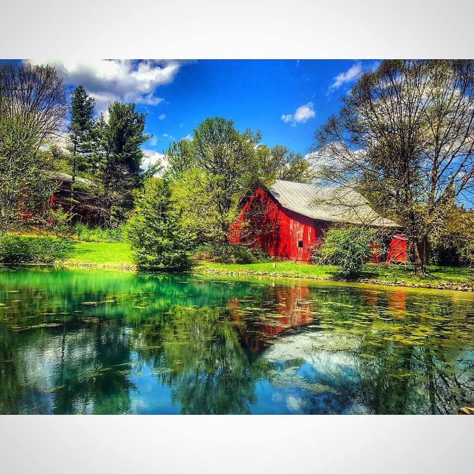 Maple Lane Farm image 5