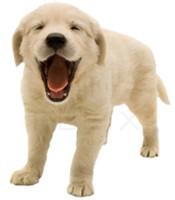 Abraham Veterinary Clinic image 2