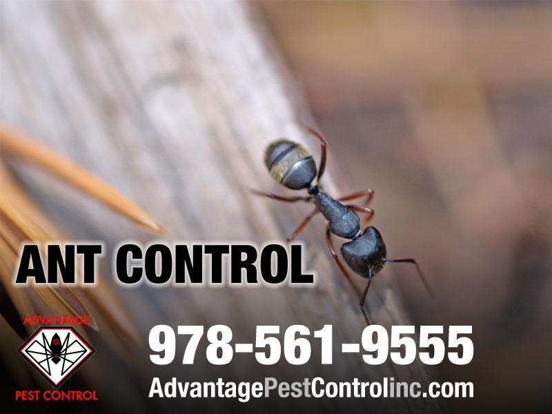 Advantage Pest Control, Inc image 14