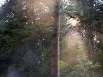 Adirondack Tree Specialists Inc image 6