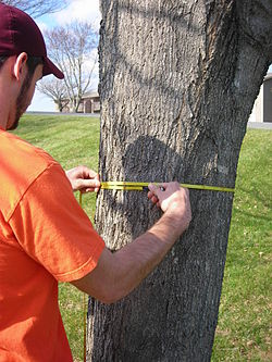 New York Long Island Tree Service image 2