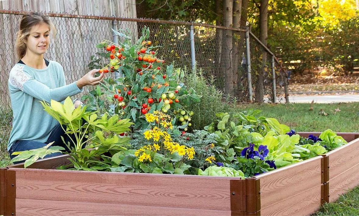 Homegrown Harvest image 3