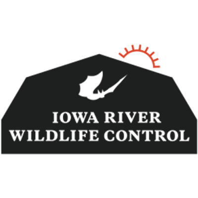 Iowa River Wildlife Control image 0