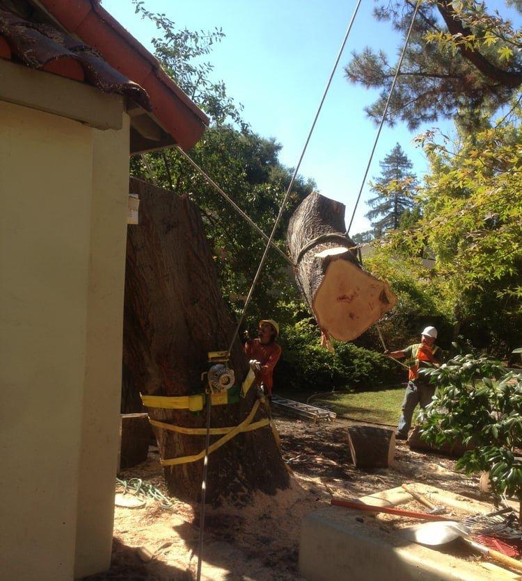DSOTO INC - Tree & Arborist Services