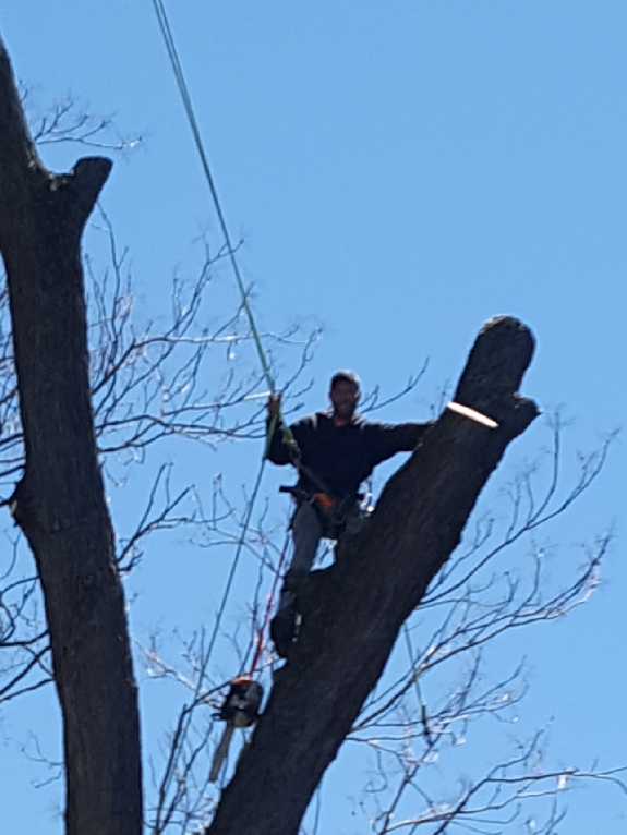 Coffman's Tree Service image 42