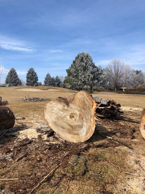 Western Cut Tree Care