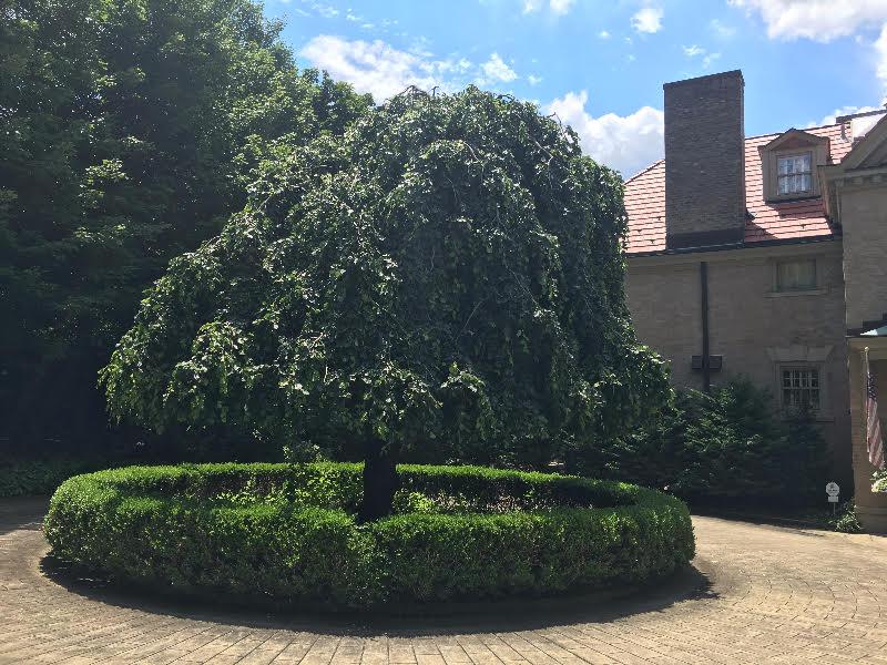 Horhut Tree Experts image 2