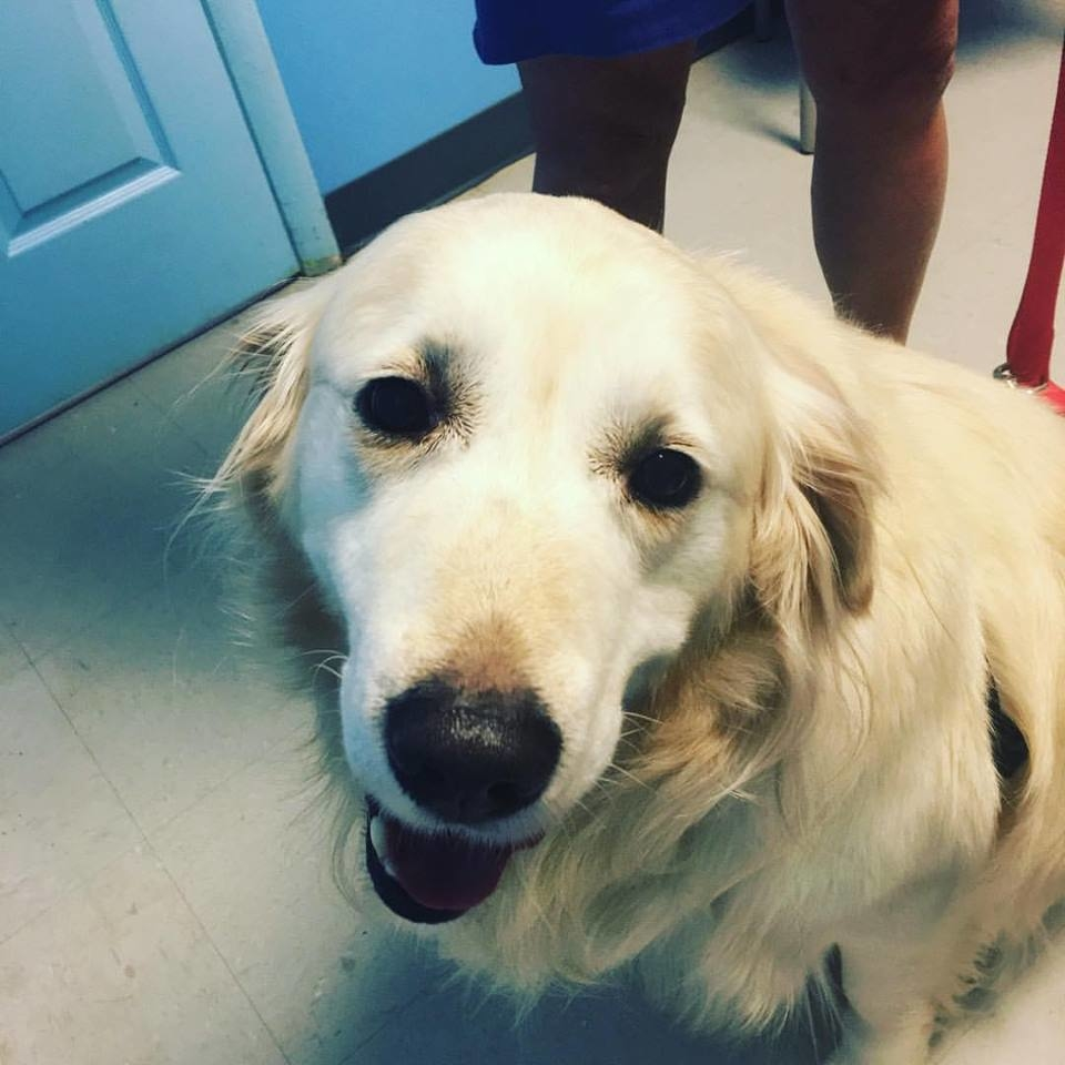 Houston Veterinary Clinic image 23