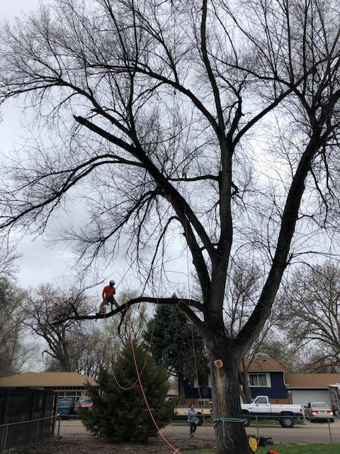 Western Cut Tree Care image 1
