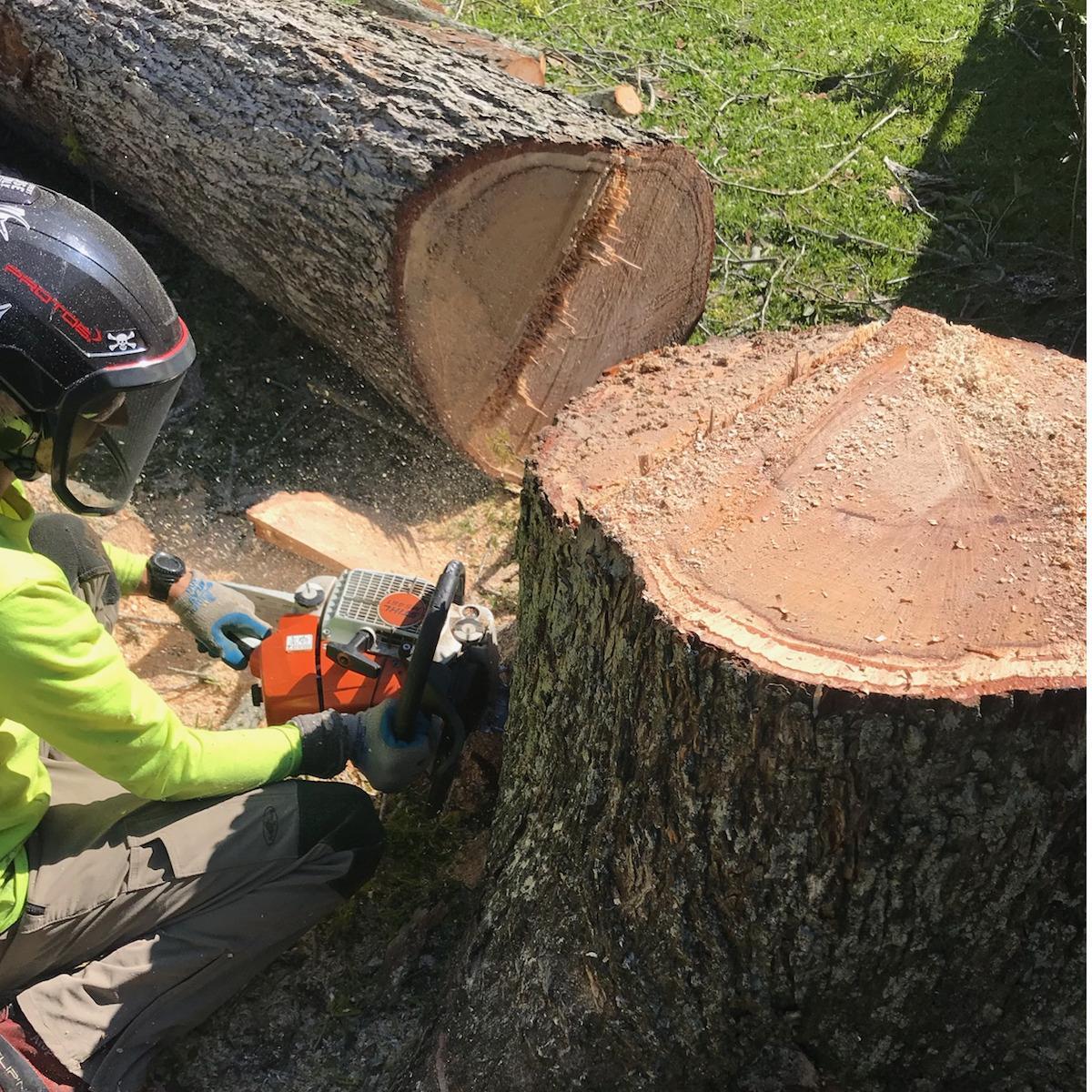 S & L Tree Service & Stump Grinding image 24