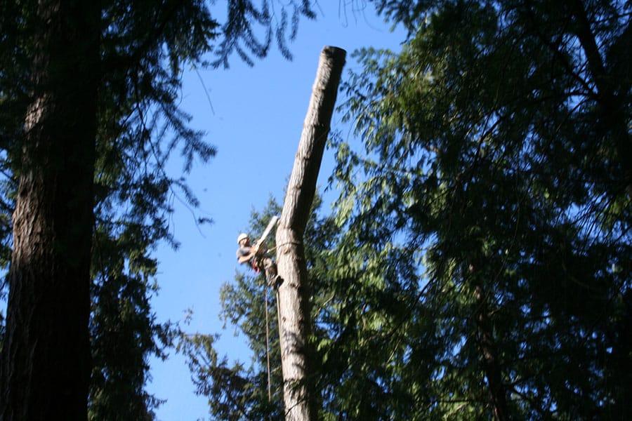 Archon Tree Services, Inc. image 11