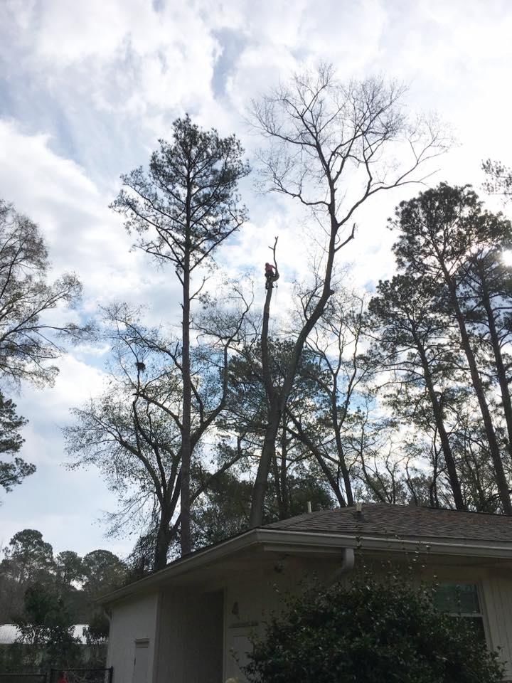 Tim Kilpatrick Tree Service image 1