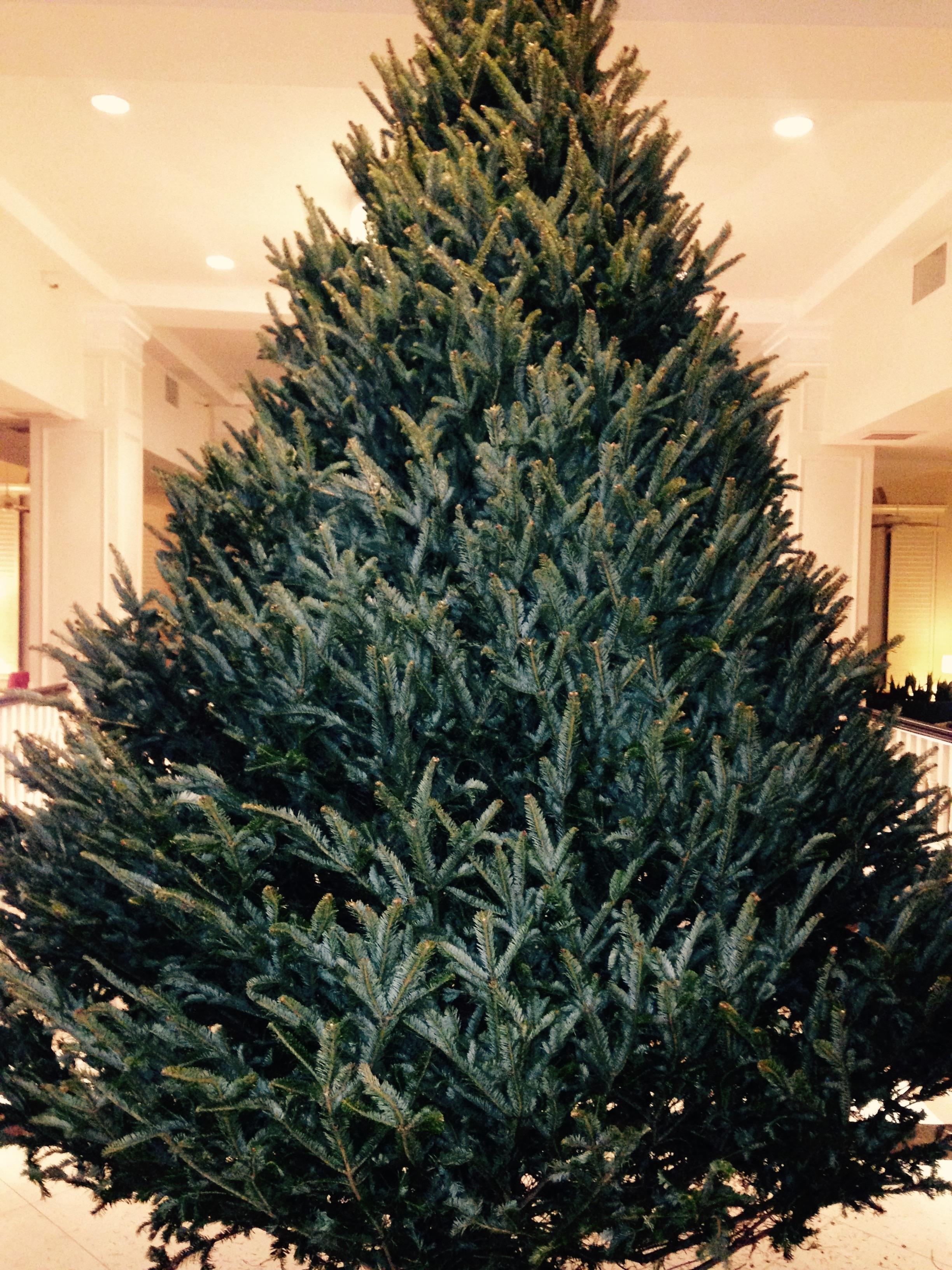 Dave's Christmas Tree Lot image 22