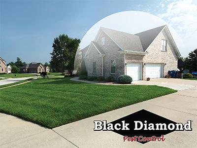 Black Diamond Pest Control image 1