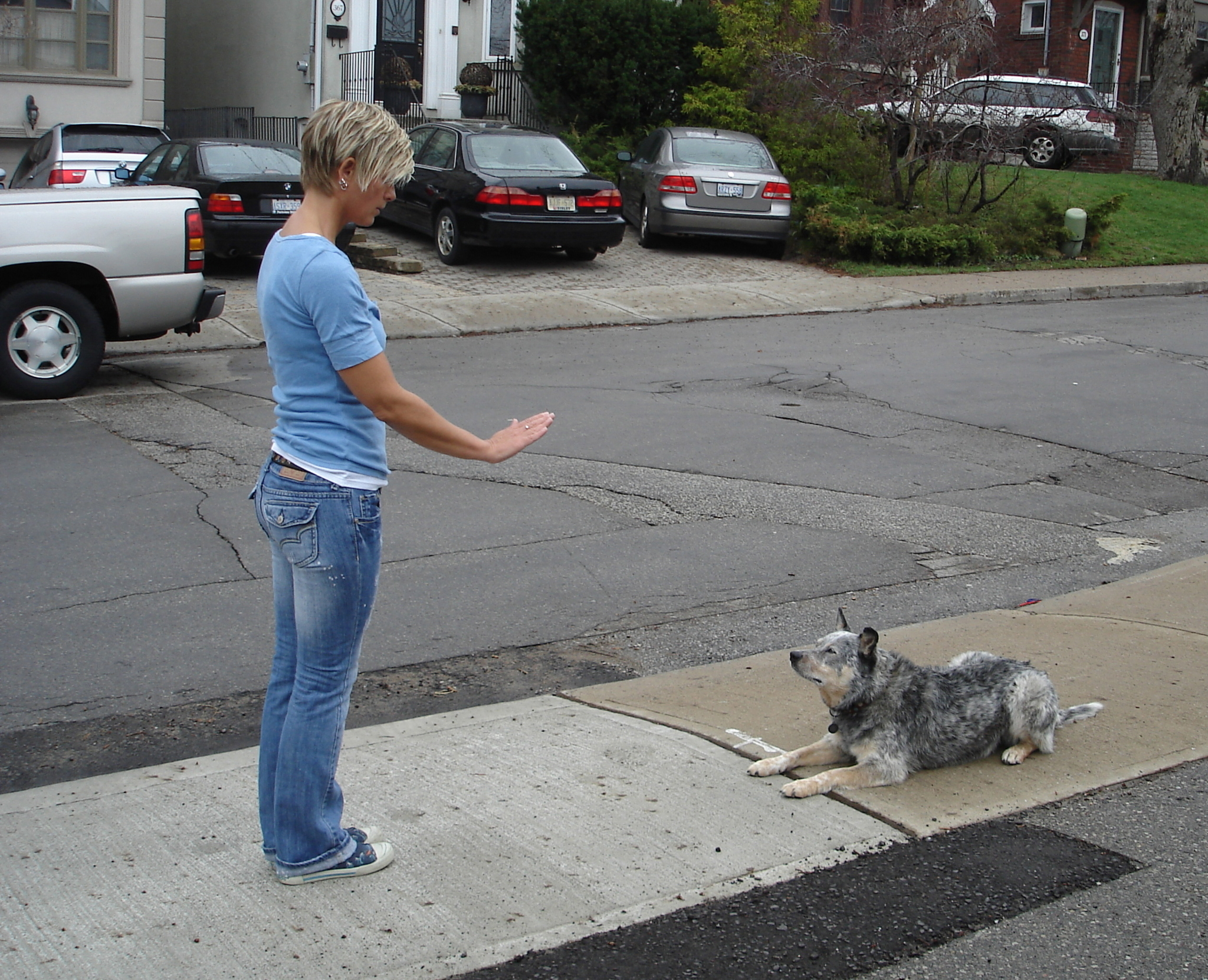 Dog Obedience Training Toronto Reviews