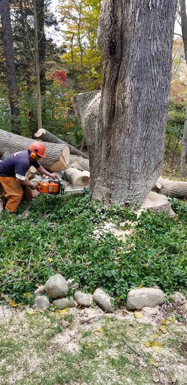 Affordable Tree Experts LLC image 3