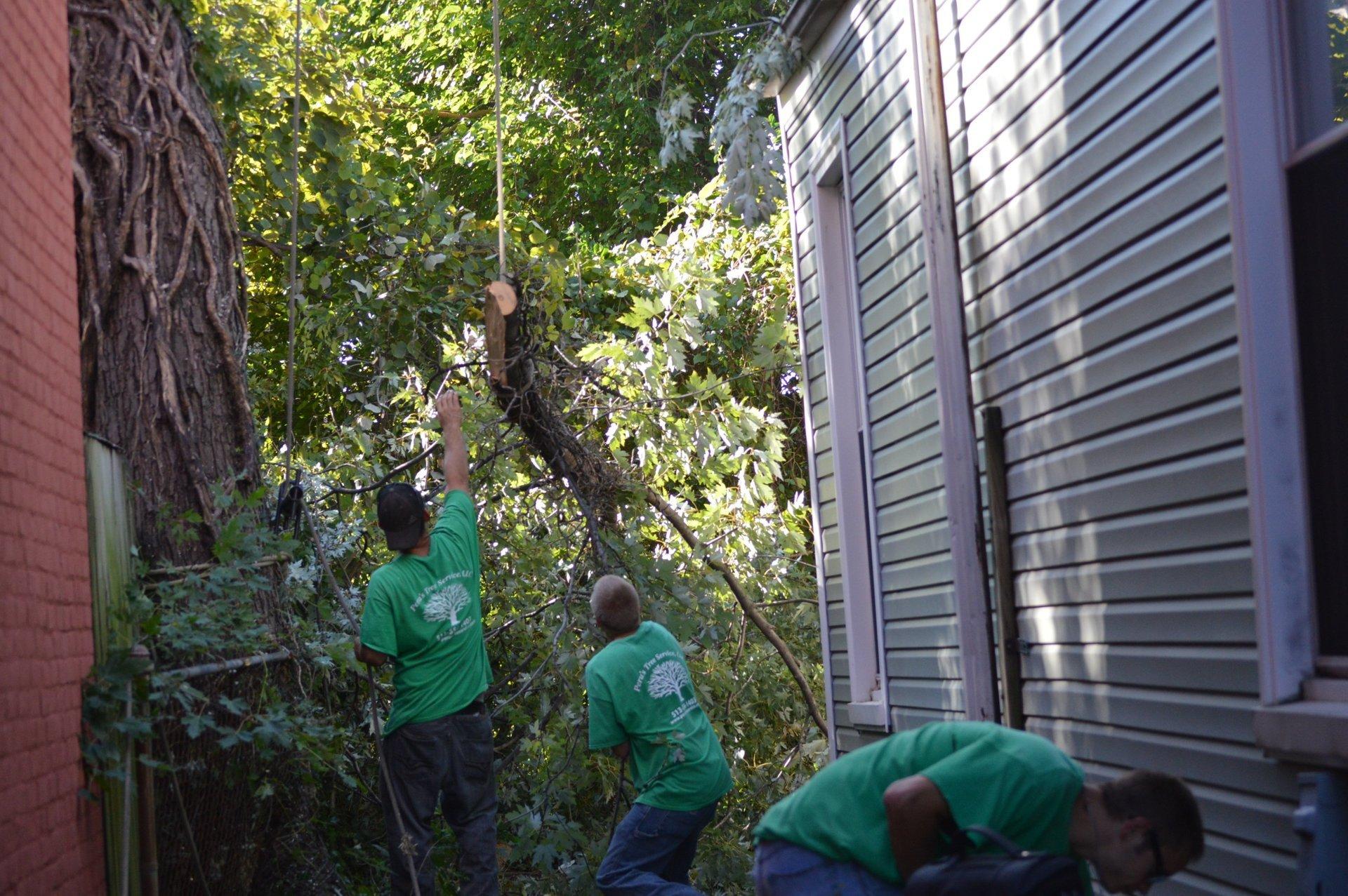 Peru's Tree Service Inc. image 8