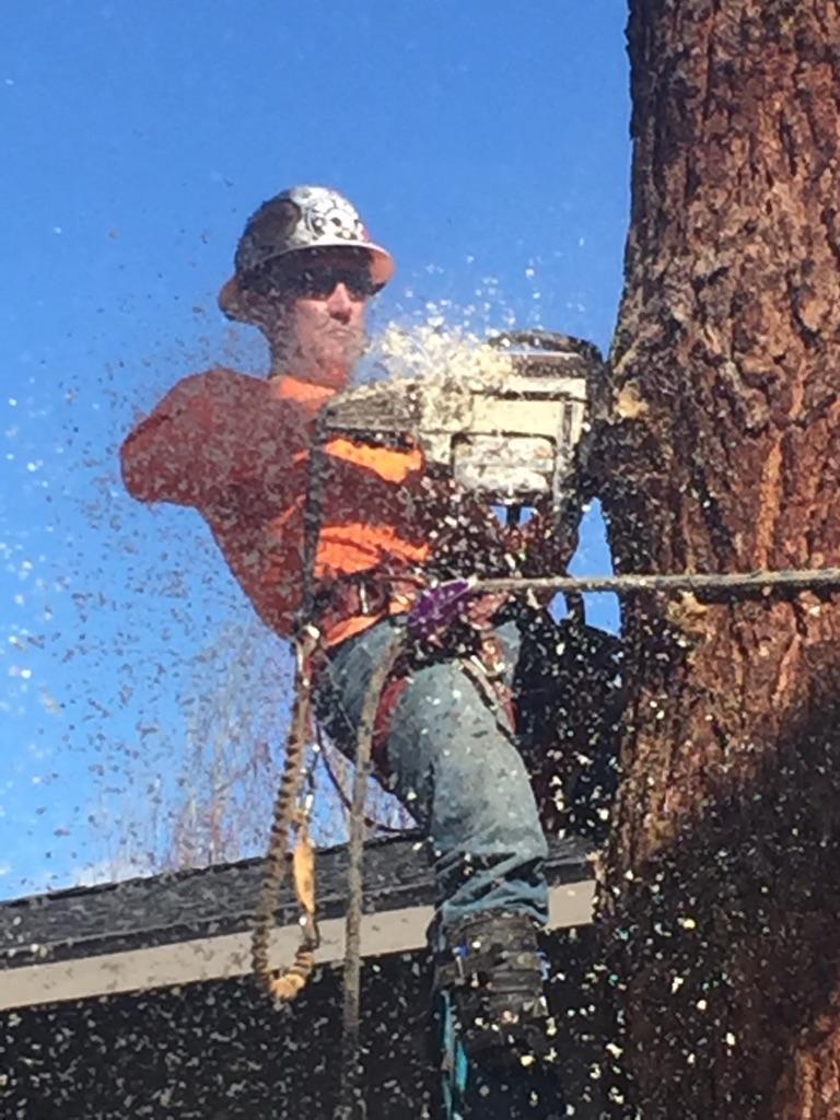 Central Oregon Tree Experts image 5