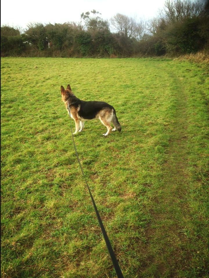 Dog Kennels In Redruth