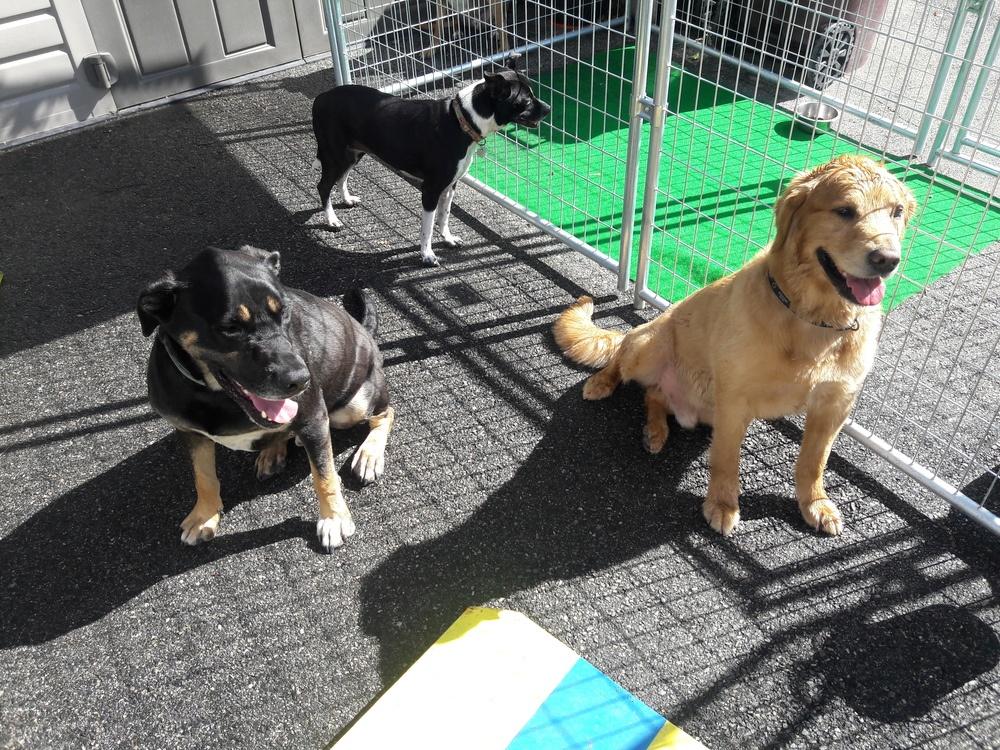 New England Canine image 8