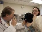 Ireland Animal Clinic image 0