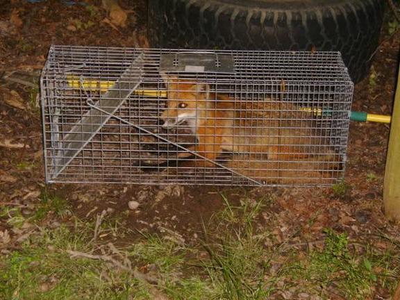 Critter Gitter image 1
