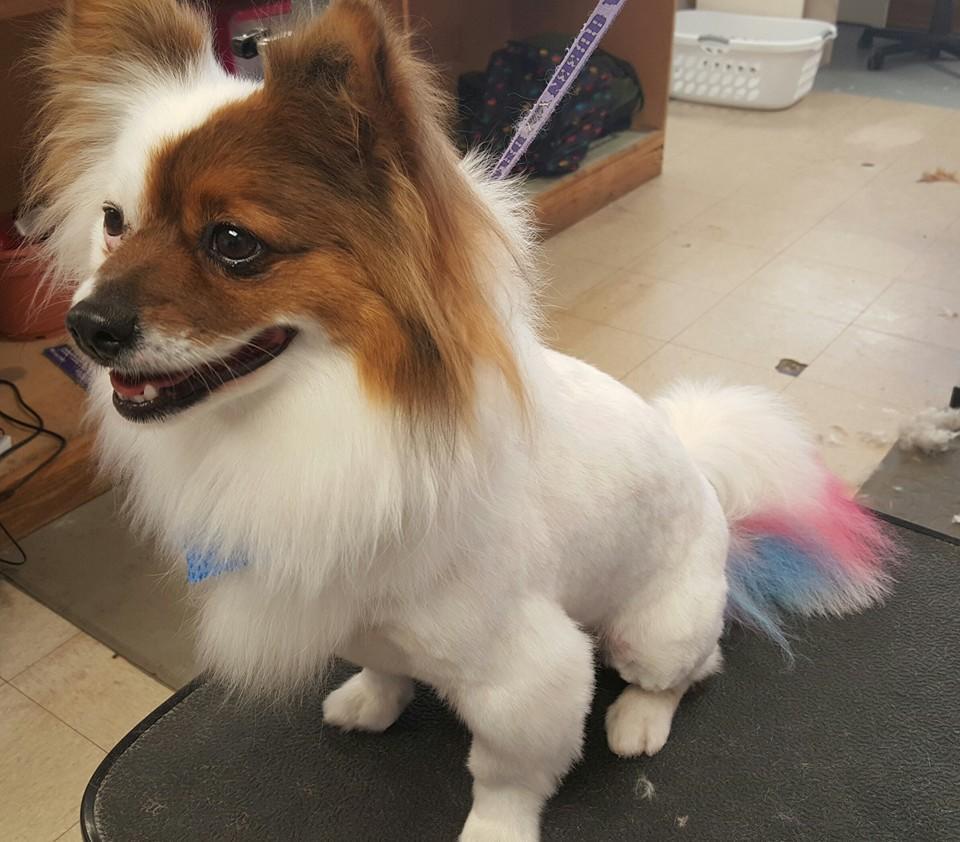 Cheryls best friends pet grooming 101 s reilly rd fayetteville nc hotels nearby solutioingenieria Gallery