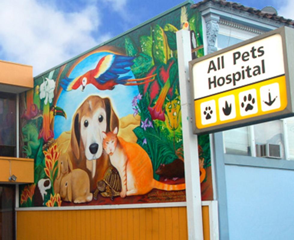 Vca All Pets Hospital 269 South Van Ness Avenue San Francisco Ca