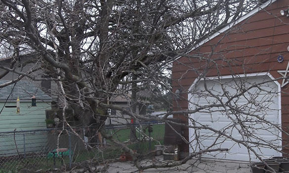 Cutting Edge Tree Services image 4