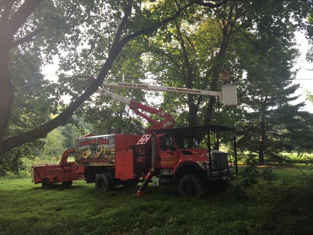 Hagan & Sons Tree Service image 3