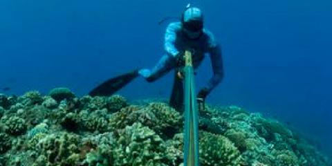 Maui Sporting Goods Spearfishing Specialties