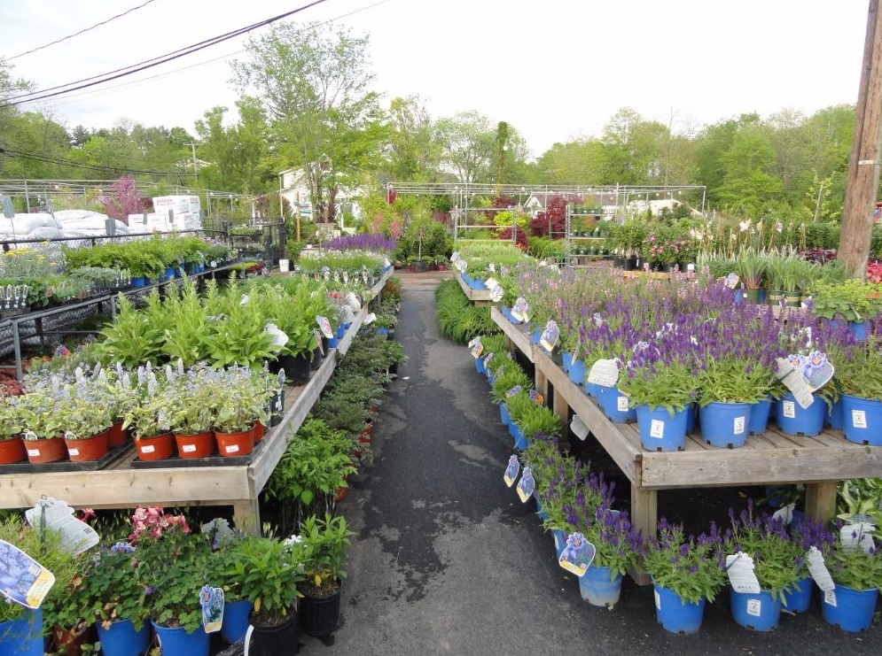 Hall's Garden Center & Florist - Berkeley Heights, NJ