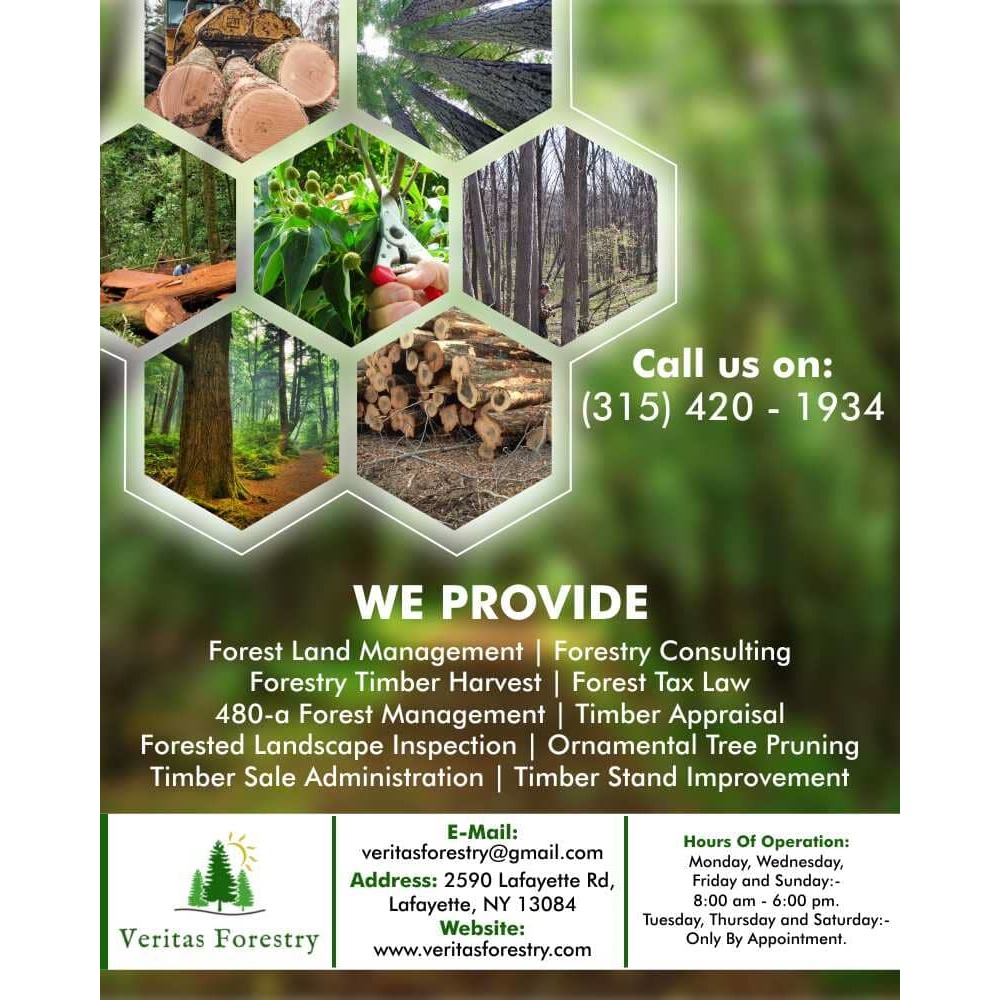 Forestry Timber Harvest Management Companies|Veritas Forestry ,Lafayette