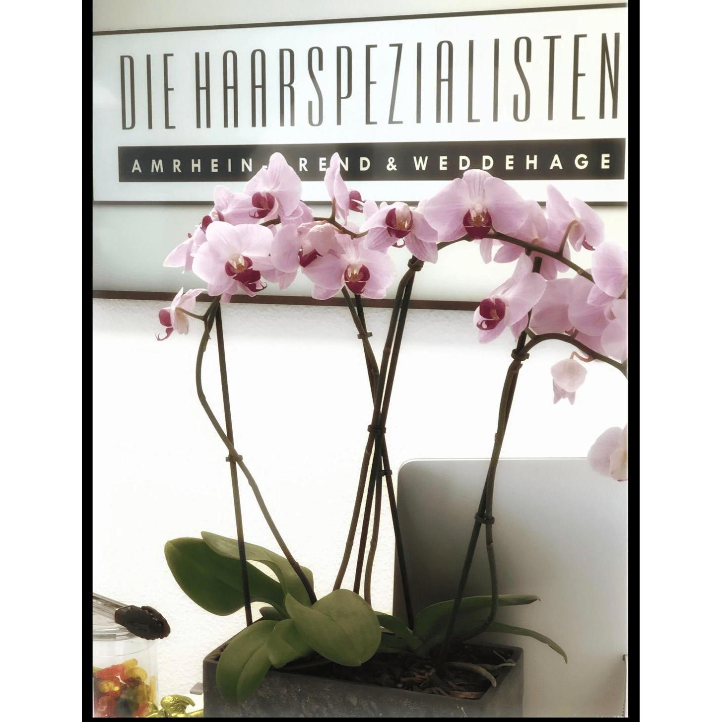 Logo von Die Haarspezialisten Amrhein-Arend & Weddehage GbR