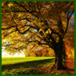 Low Rate Tree Service image 0