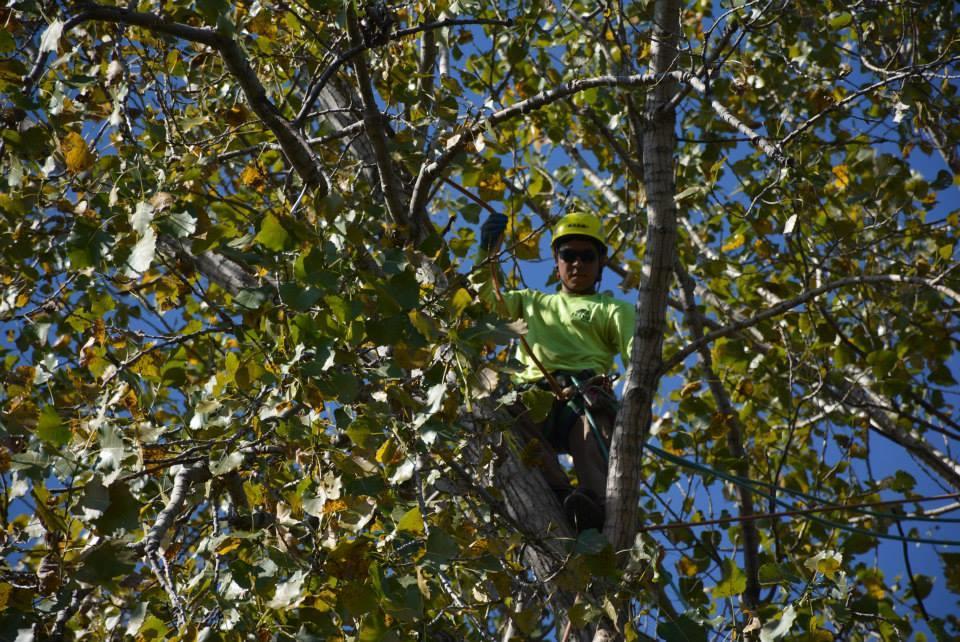 Rivas Tree Service image 9