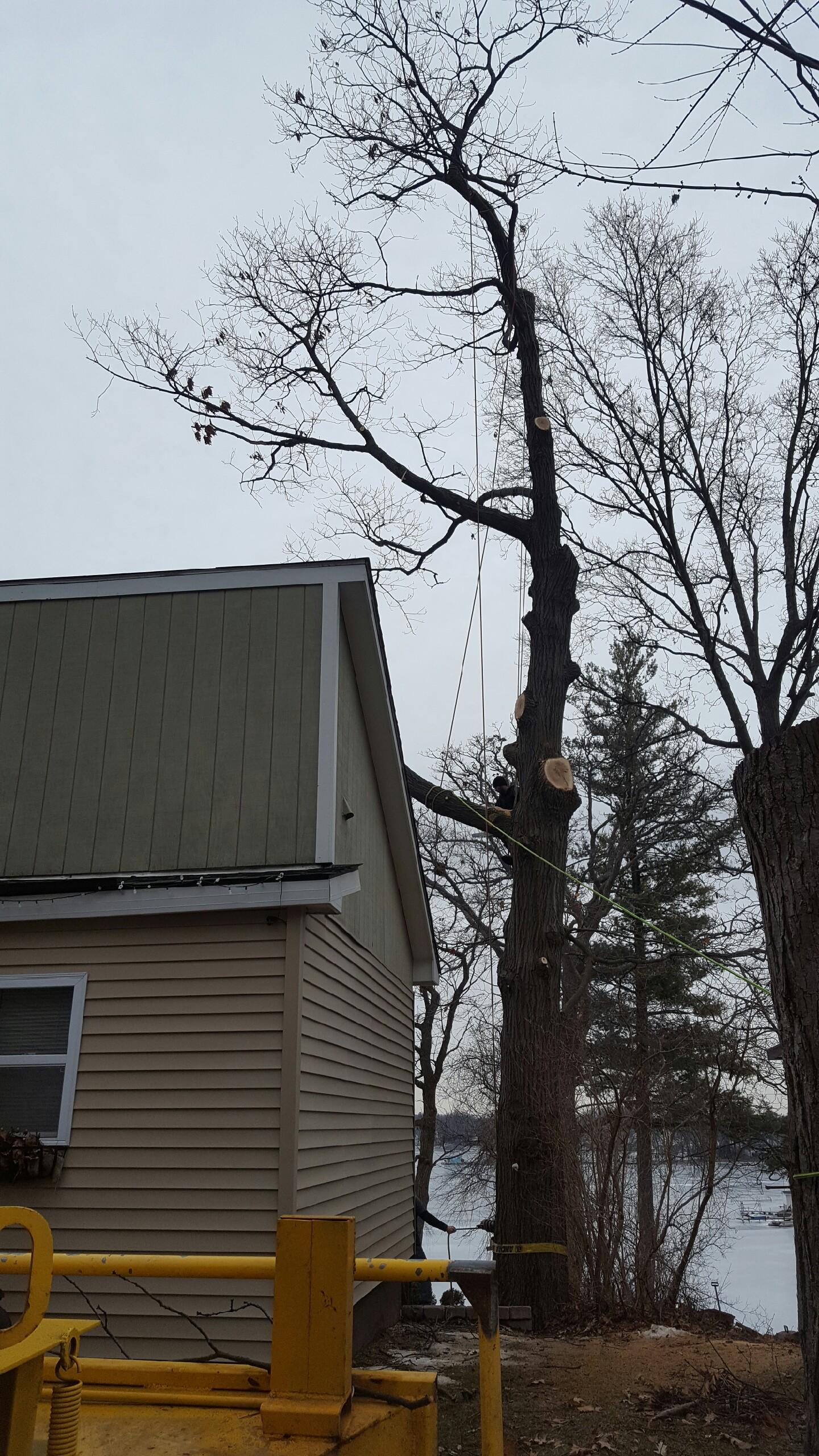 Coffman's Tree Service image 2