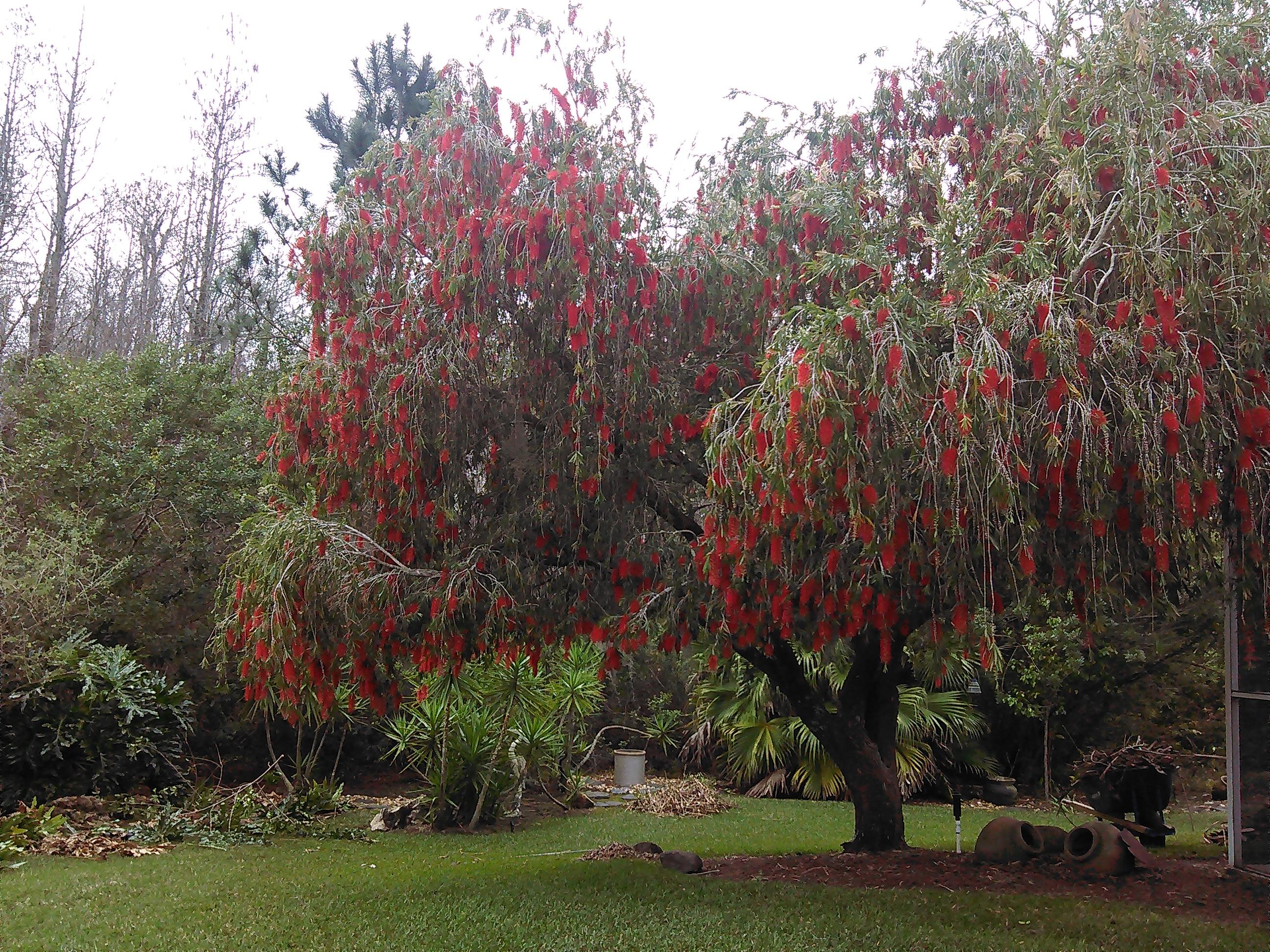 Johns Palms Landscaping image 16