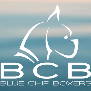 image of Blue Chip Boxers