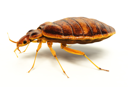 Texas Bugs Or Us Bed Bug Exterminator image 1