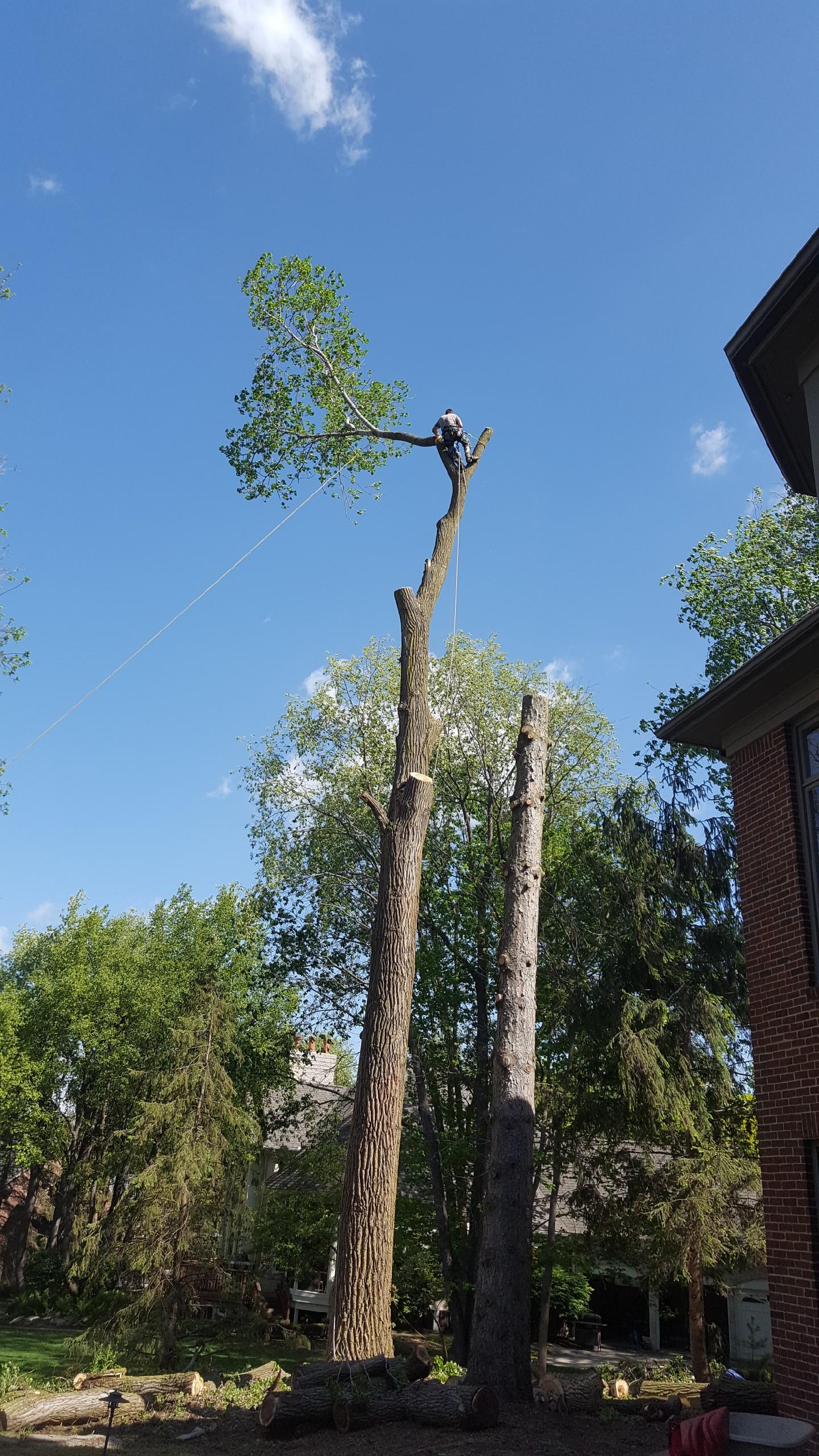 Coffman's Tree Service image 23