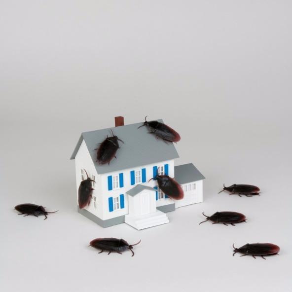 TNR Exterminators image 5