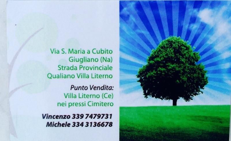 Vivai Fioretto Vincenzo - Ingrosso Piante Ornamentali