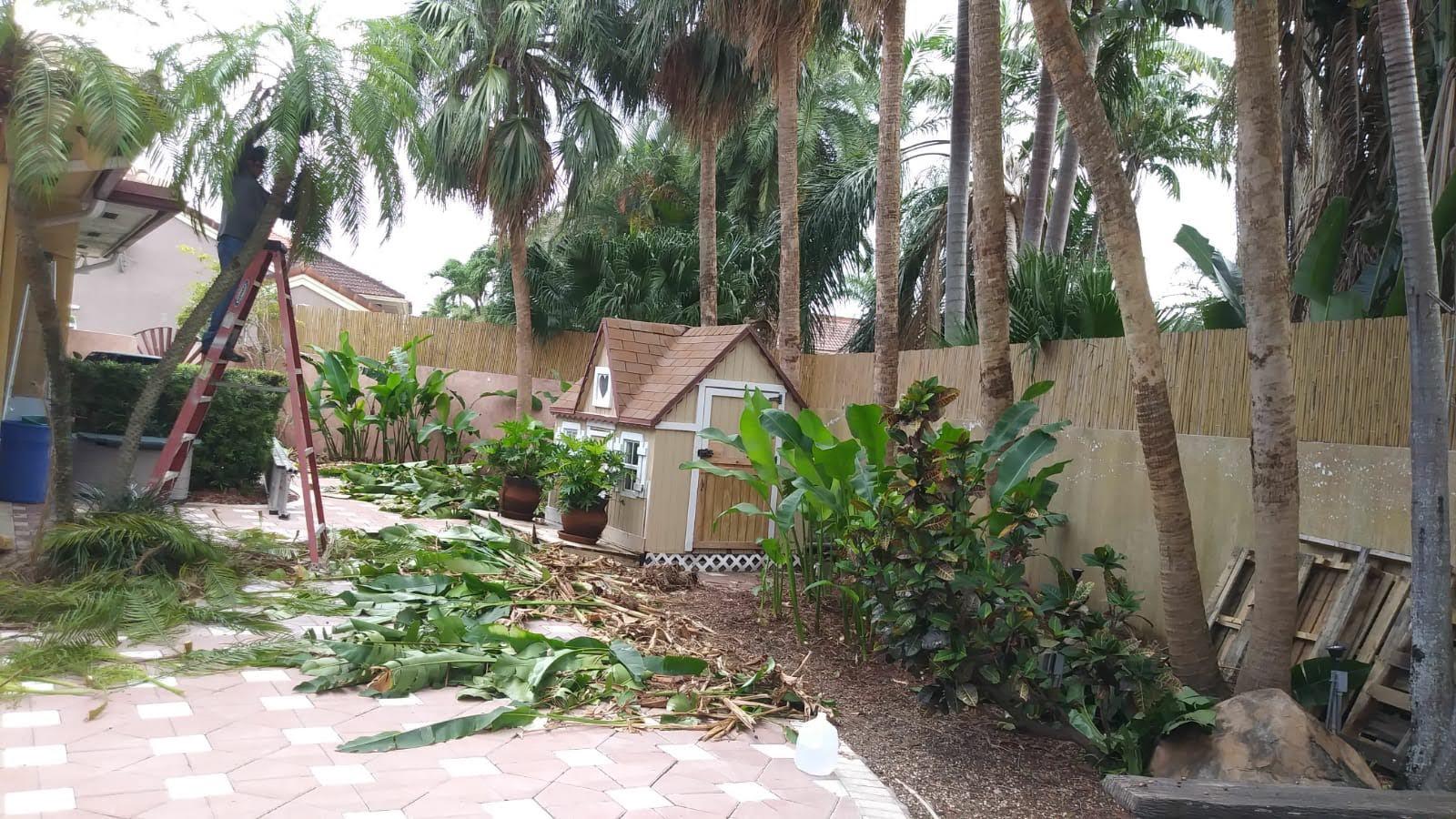 Jireh Tree Care image 6